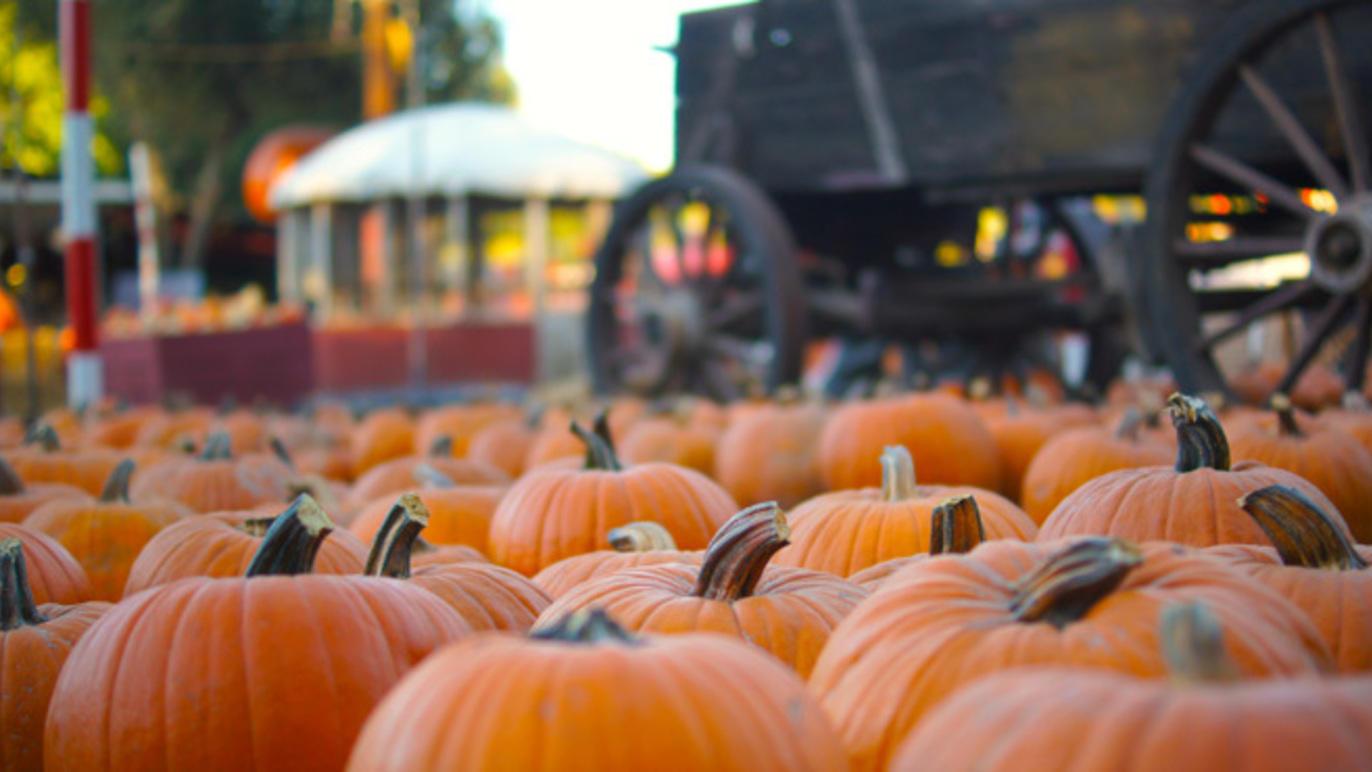 Pumpkin Patches-L.A.