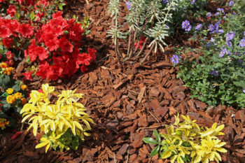 Home Tips Of The Week The Mulch Must Knows Rodeo Realty